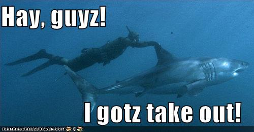 diver rides shark and says hay guyz i gotz take out
