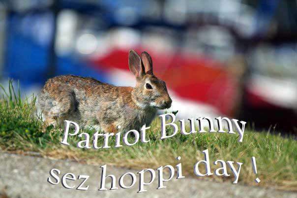 nate michals patriot bunny sez hoppi day !